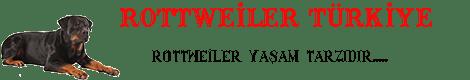 Satılık Rottweiler | Rottweiler Çiftliği , Secereli Rottweiler