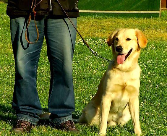 Köpeğimi Nasıl Eğitirim