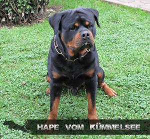 hape-vom-kummelsee-2