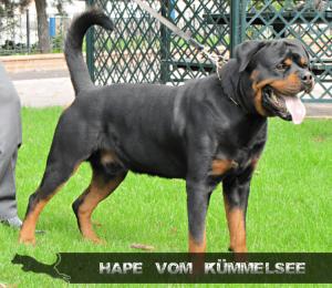 hape-vom-kummelsee-4