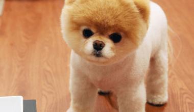 Köpek Temini