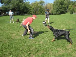 schutzhund-egitimi-11