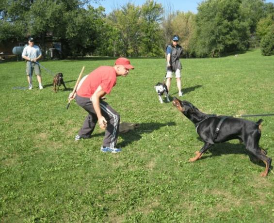 Schutzhund Eğitimi