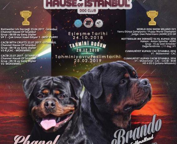 Eşleşme – BRANDO vom Entferntland X CHANEL Hause Of İstanbul